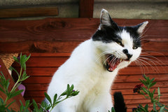 10 Things Humans Do That Cats Dislike