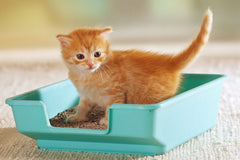 How To Keep Your Cat Litter Tray Clean