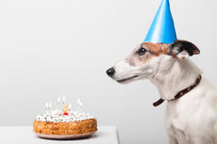 How To Make A Birthday Cake For Your Pets