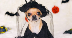 Ultimate Pet Halloween Guide 2020