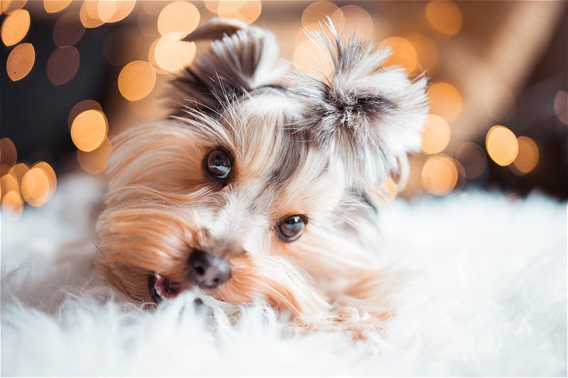 9 Christmas Gift Ideas Under $50 Your Dog Will Absolutely Adore
