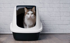 How To Choose The Right Cat Litter Box