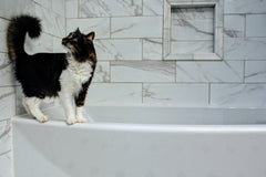 How Often Should I Bathe My Cat?