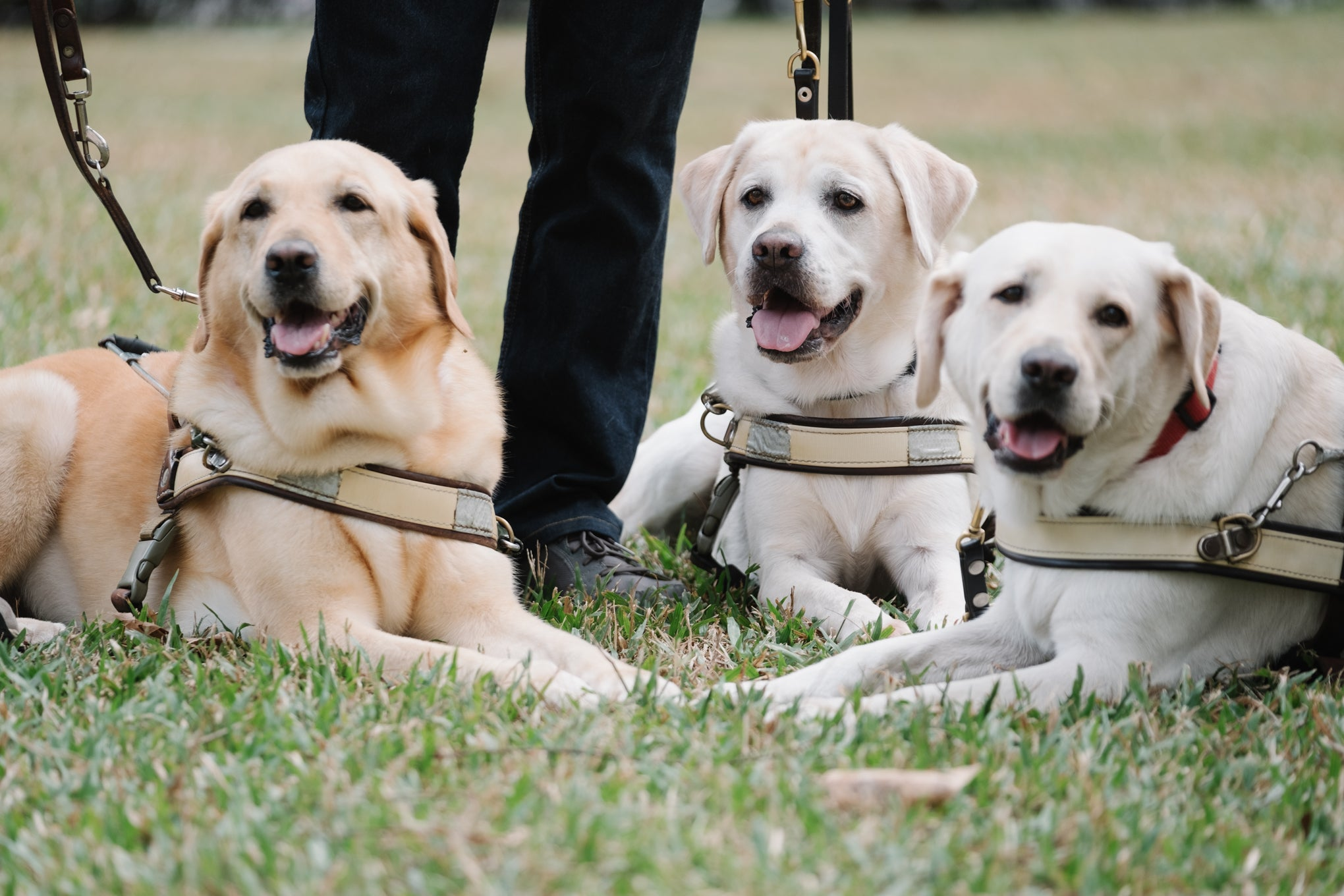 Annie's Story: A Guide Dog Could Change My Life