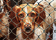 How To Help Homeless Animals When Adoption Isn't An Option