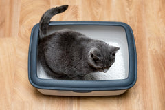 Cat Litter Box Types On A Budget