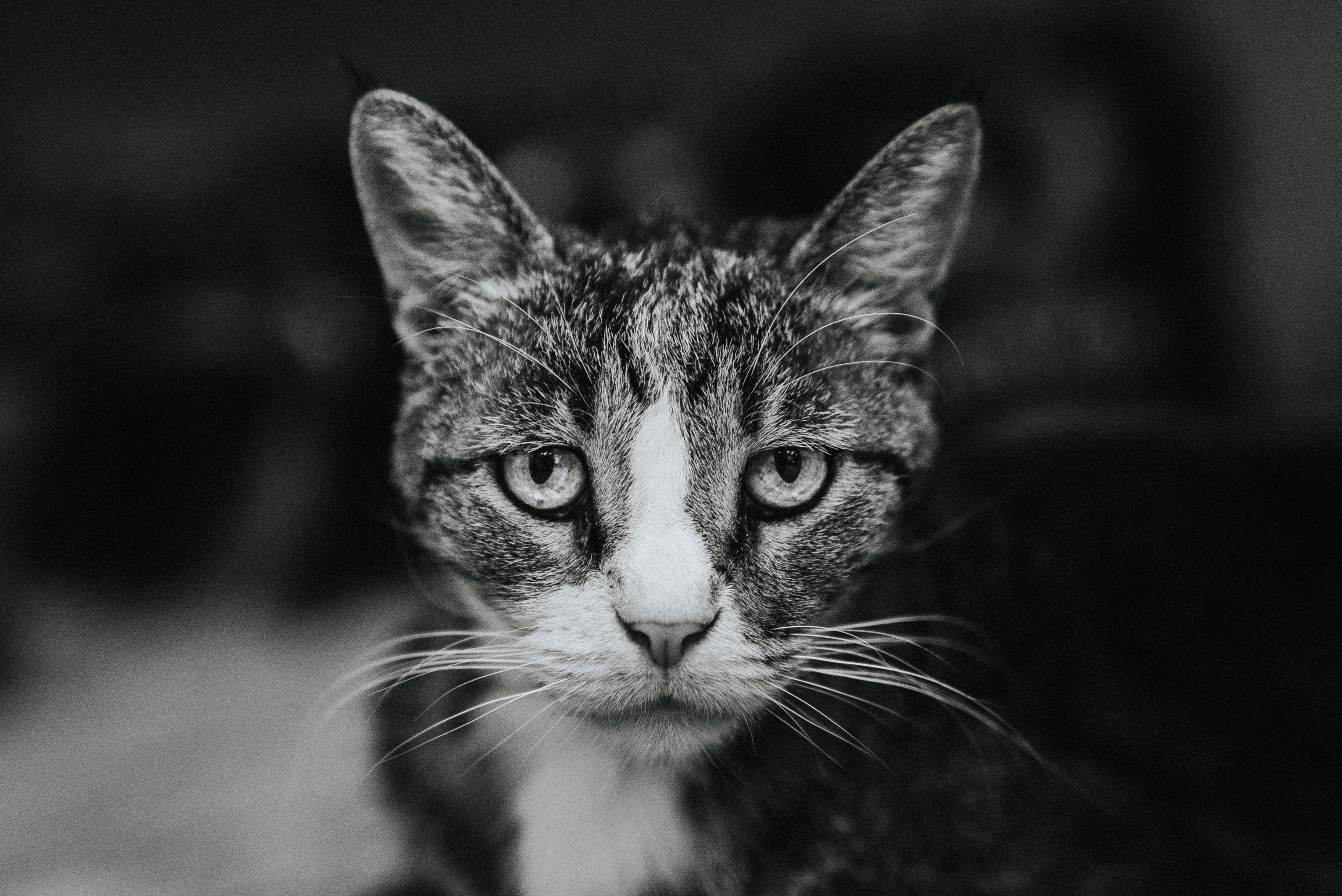 Pain Relief for Cats: What Can I Give My Cat for Pain?
