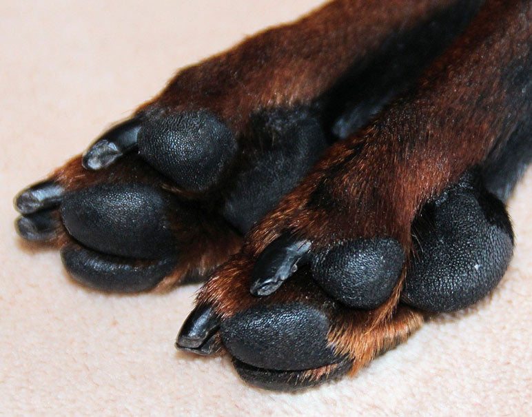 Why Your Dog Paws Are Turning Brown