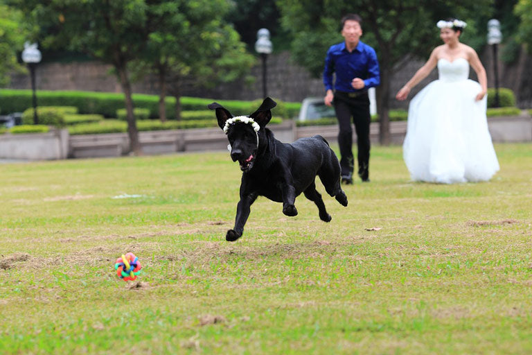 List Of Places To Hold A Pet-Friendly Wedding In Singapore