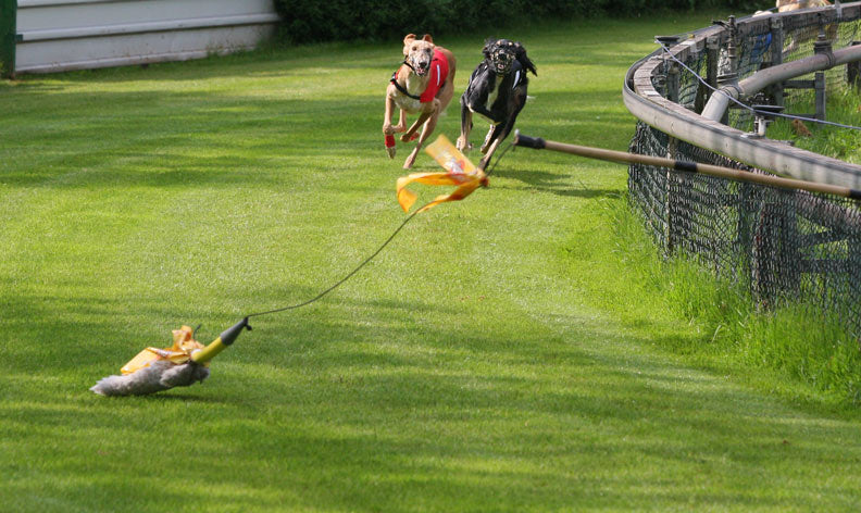 Dog Training Tips: How To Start Lure Coursing Training