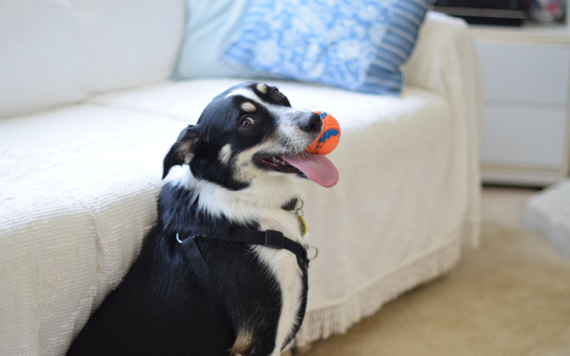 How To Choose Dog Toys That Are Perfectly Safe For Your Dog