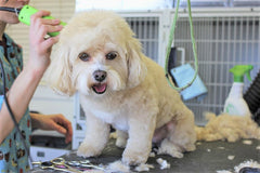 How Often Should You Groom Your Dog?