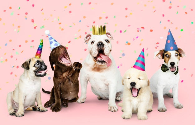 Perfect Ideas To Celebrate Your Pet's Birthday In Style