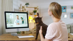 Sick Pet At Home? perromart Is Here To Bring Online Vet Consultations To The Masses!