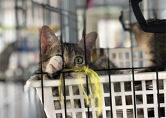 All About Cat and Kitten Adoption
