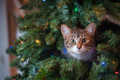 10 Holiday Gift Ideas Your Cat Will Love