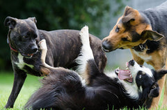 The Biggest Dog Breeds In The World