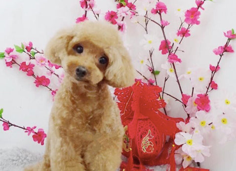 List of Pet Groomers With NO Chinese New Year Surcharge