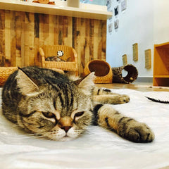 List Of Cat Cafes In Singapore