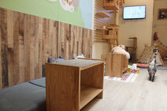 Meomi Cat Cafe Singapore Review