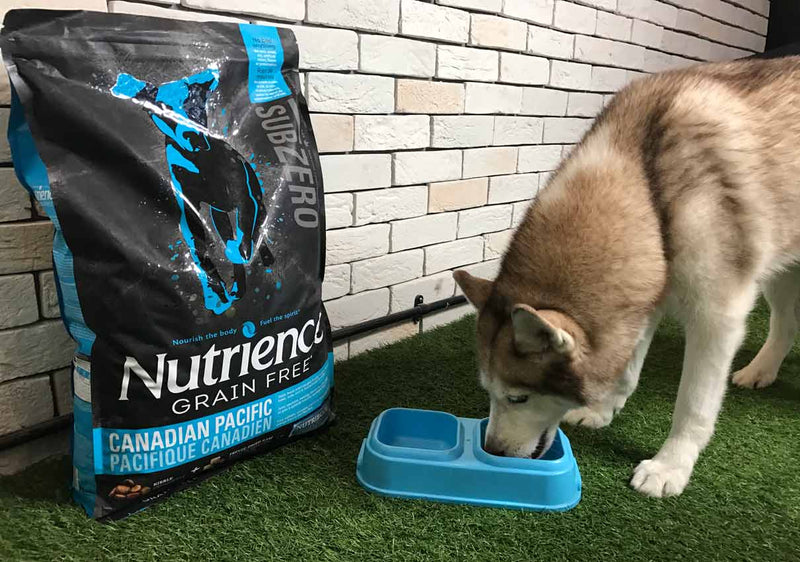 Nutrience Grain Free Subzero Dog Food Review