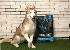Nutrience Dry Dog Food Review