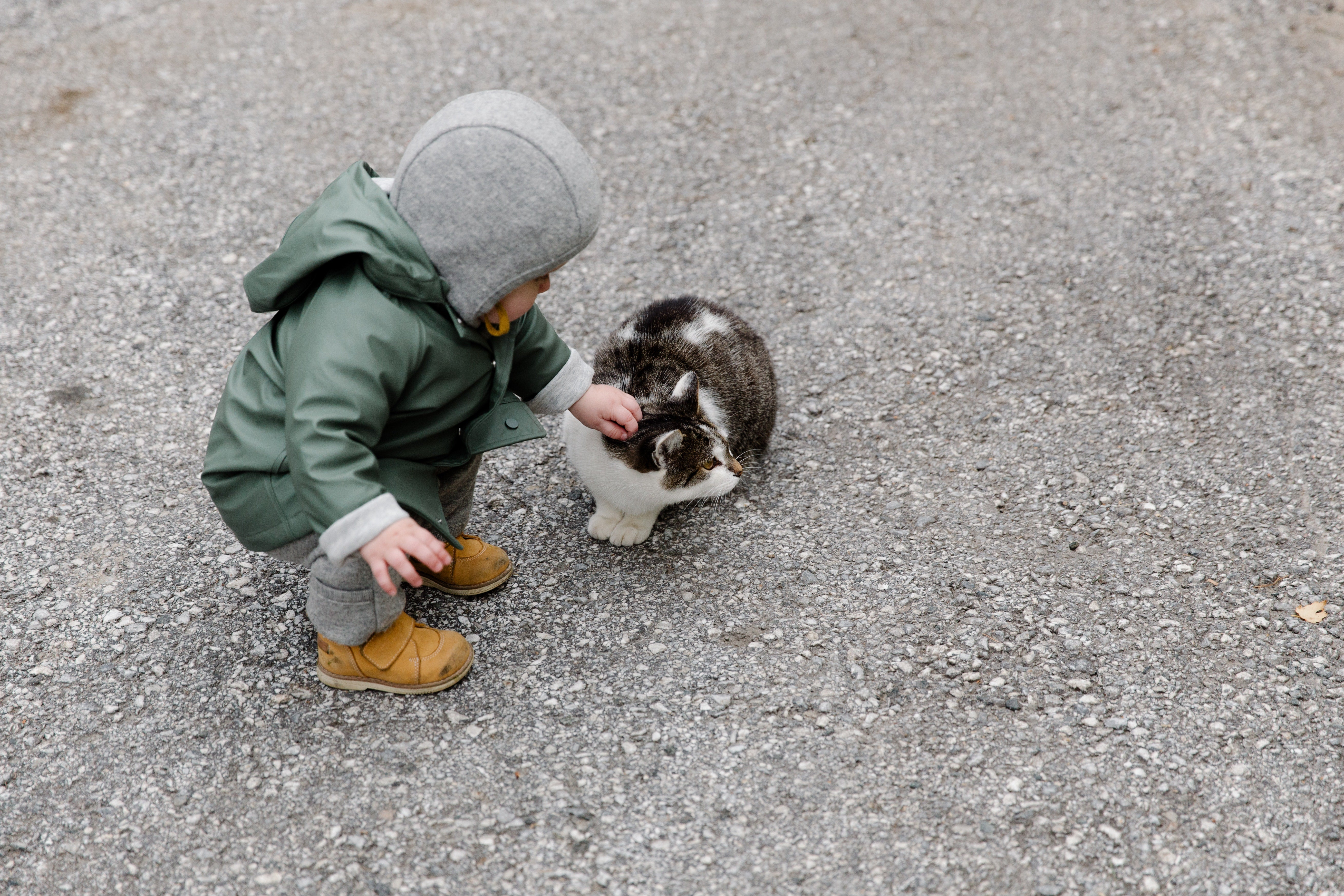 Cat Breeds That Are Great With Kids