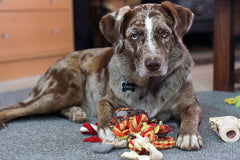 Why Do Dogs Destroy Their Toys?