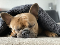 5 Ways to Keep Pets Warm this Rainy Season