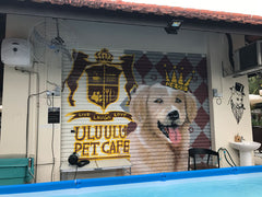 PerroMart Visits Ulu Ulu Pet Cafe Singapore Review