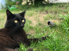 Why Do Cats Chase Birds?