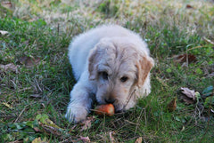 Seemingly Harmless Vegetables Dogs Should Avoid