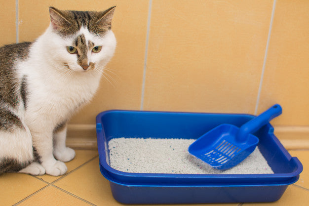 Why Does My Cat's Litter Box Smell So Bad?