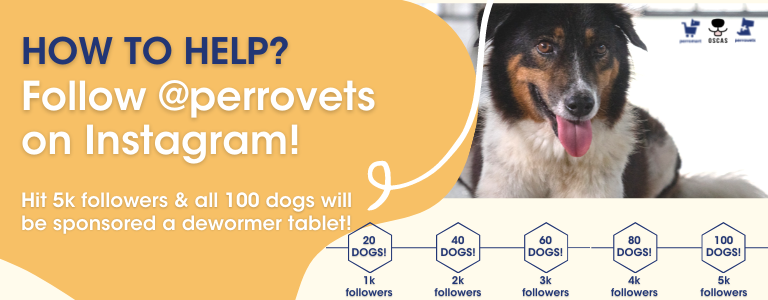 How to help deworm an entire shelter: perromart community challenge