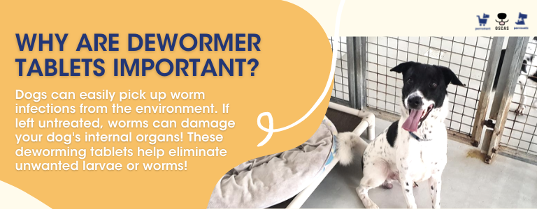 Why are worming tablets important for dogs: perromart community challenge