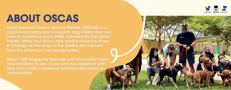 About OSCAS - oasis second chance animal shelter: perromart community challenge