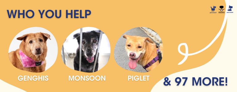 Dogs from oscas you will help: perromart community challenge