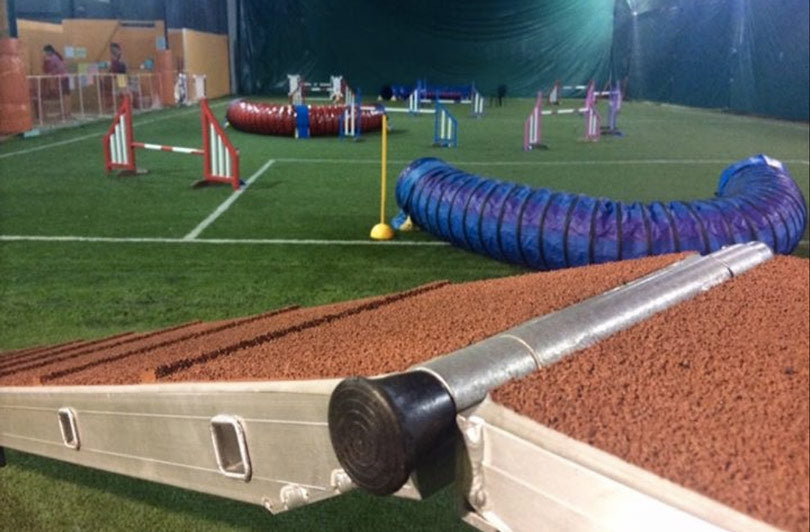 singapore-indoor-dog-agility-arena-places