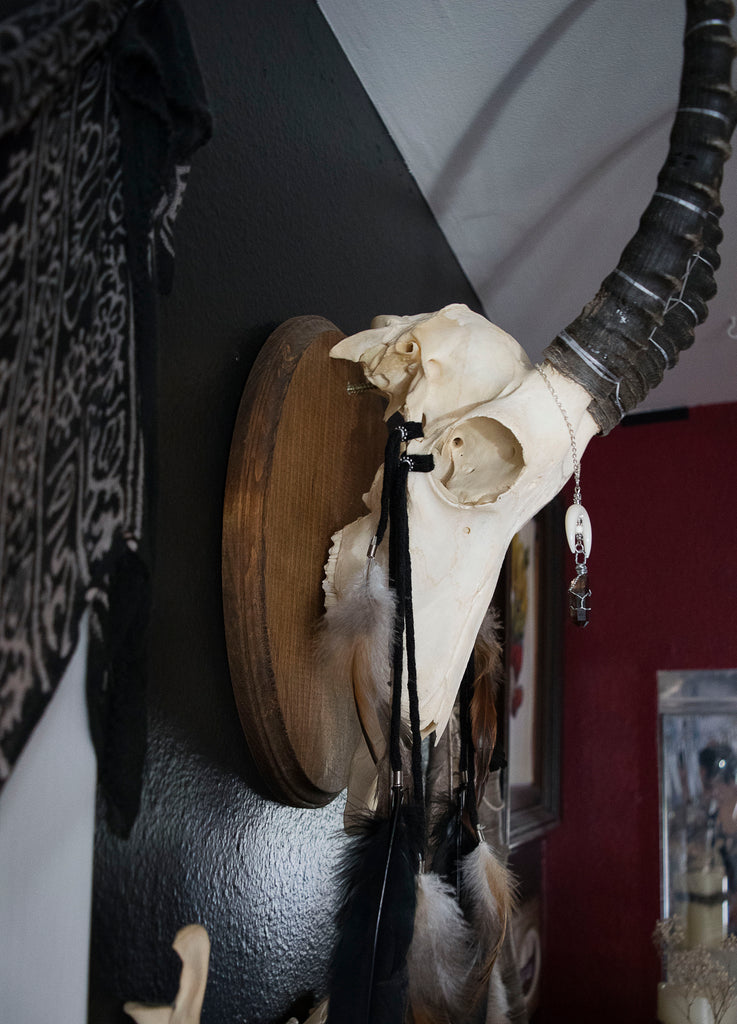 Belsbok Skull Dream Catcher Wall Mount