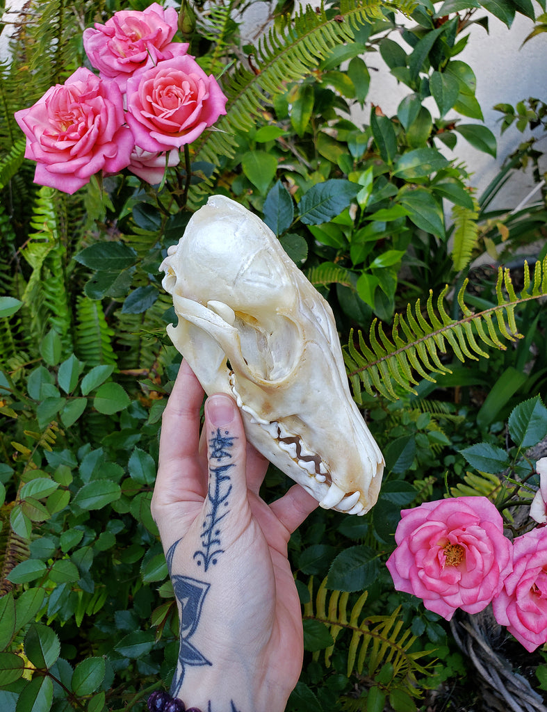 Tribal Engraved Fox Skull