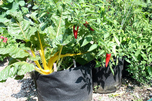 Is your container contaminating your crop? The hidden risk of plastic containers.