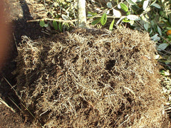 Air pruned roots
