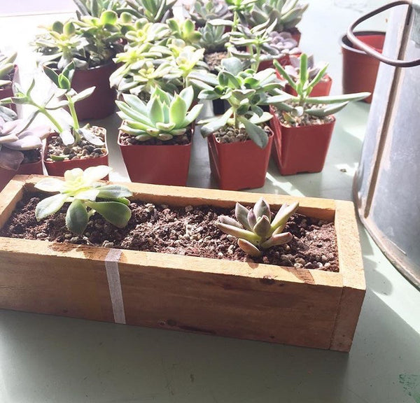 Cedar Herb Boxes. Wednesday May 10th. 6:30-8:30 pm.