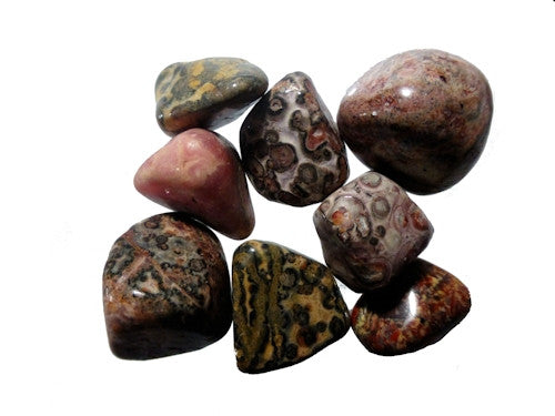 Leopardskin Jasper Tumble Stones medium