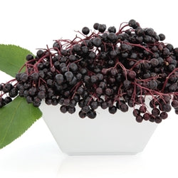 Elderberry Concentrate (TFA)