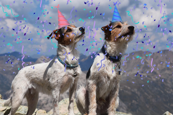 Happy First Birthday Pupsters!