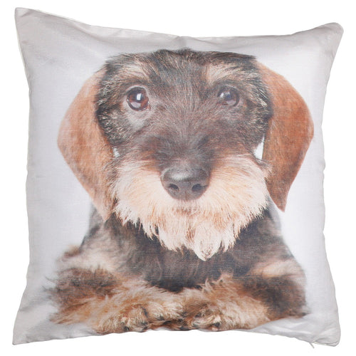 Shalinindia Digitally Printed Animal Face Cushion Cover Set Of 2,18x18 Inch,Faux Silk Dupion,Wire Haired Dachshund