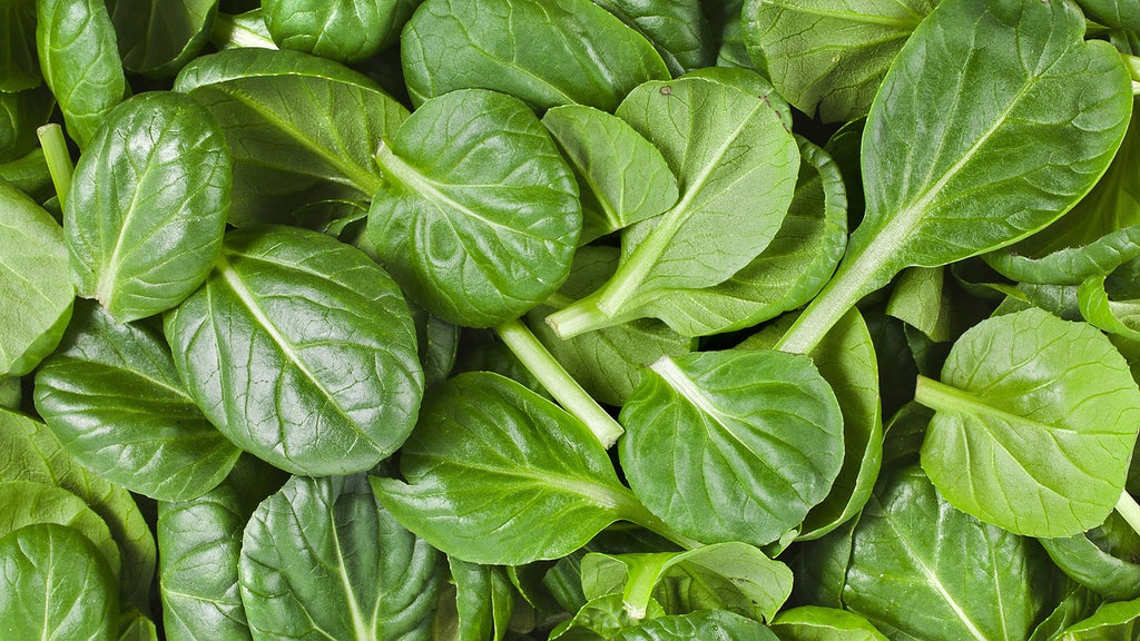 Turns Out Your Mom Was Right... - Ingredient Spotlight - Spinach