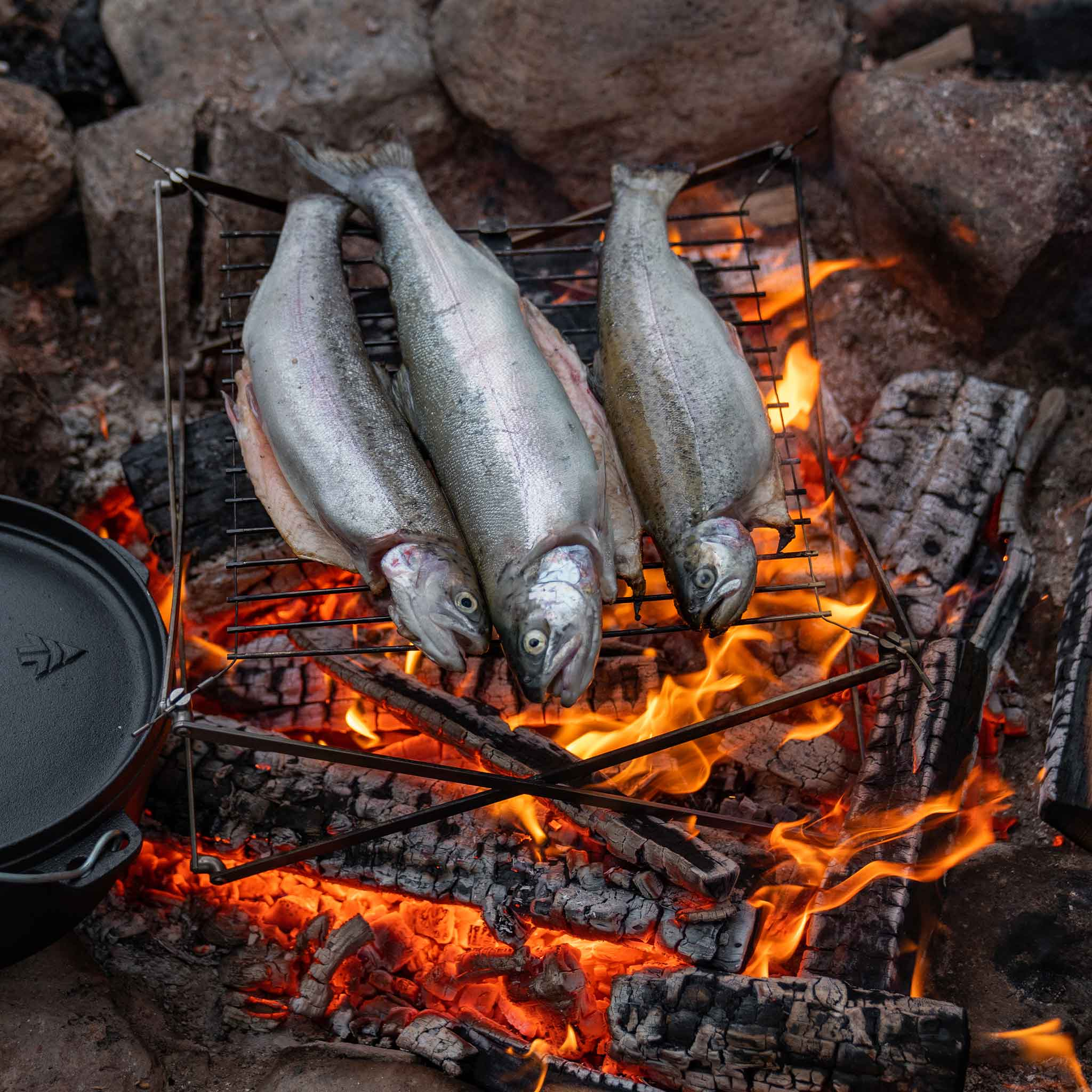 Cooking salmon campfire grill