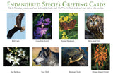 Donate $18 and receive Endangered Species Greeting Cards